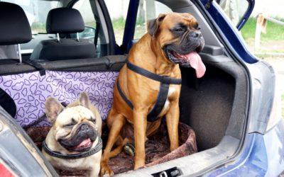 Viel Spaß beim Kurzurlaub mit Ihrem Hund