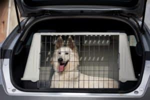 Der Hund liegt sicher in einer Box im Kofferraum.