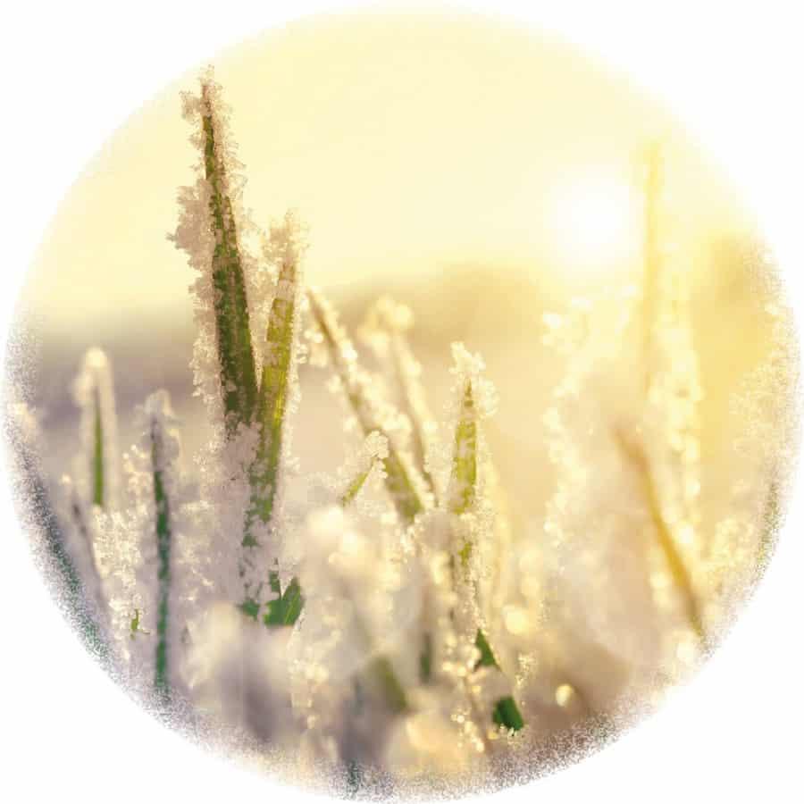 Rasen im Winter: Gefrorene Flächen bitte nicht betreten.