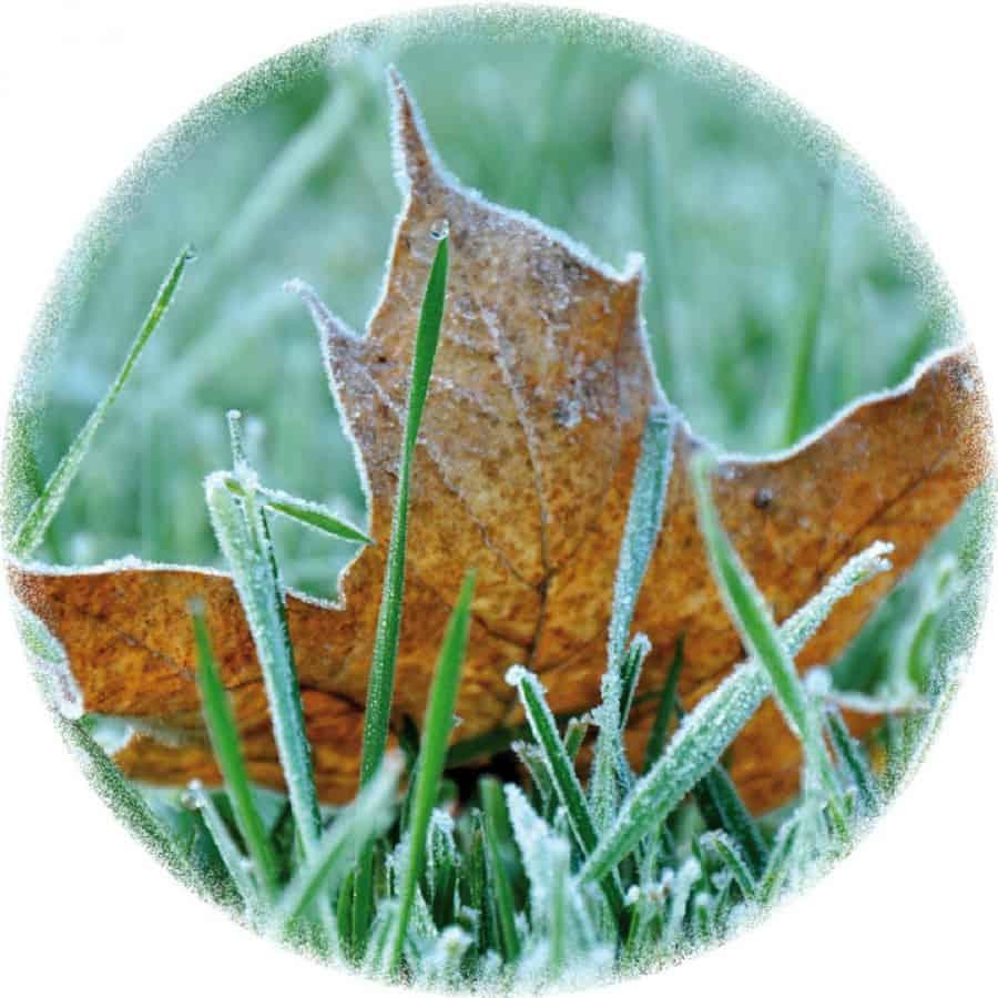 Laub sollte im Herbst vom Rasen entfernt werden.