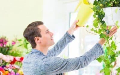 Wussten Sie schon: Manche Zimmerpflanzen filtern die Luft