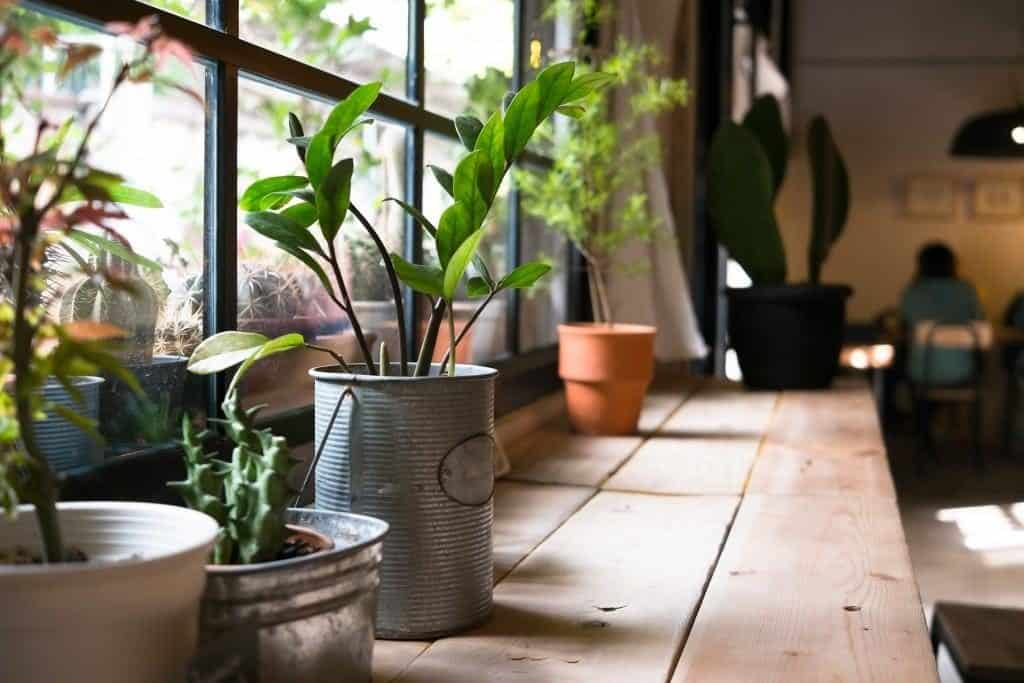 Ein guter Standort für Zimmerpflanzen ist häufig die Fensterbank.