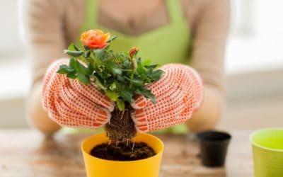 Wissenswertes über Zimmerpflanzen