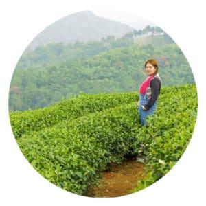 Eine Frau steht inmitten eines großen Feldes aus Teepflanzen.
