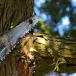 Gartentipp: Es wird Zeit für den Winterschnitt