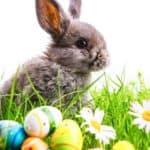 Warum bringt der Osterhase leckere Eier? Wissenswertes zu Ostern.