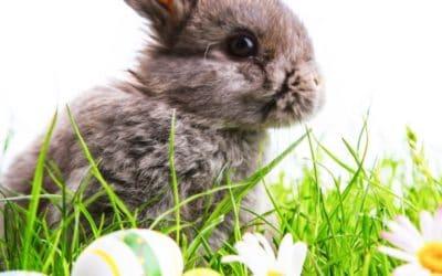 Warum bringt der Osterhase leckere Eier? Wissenswertes zu Ostern