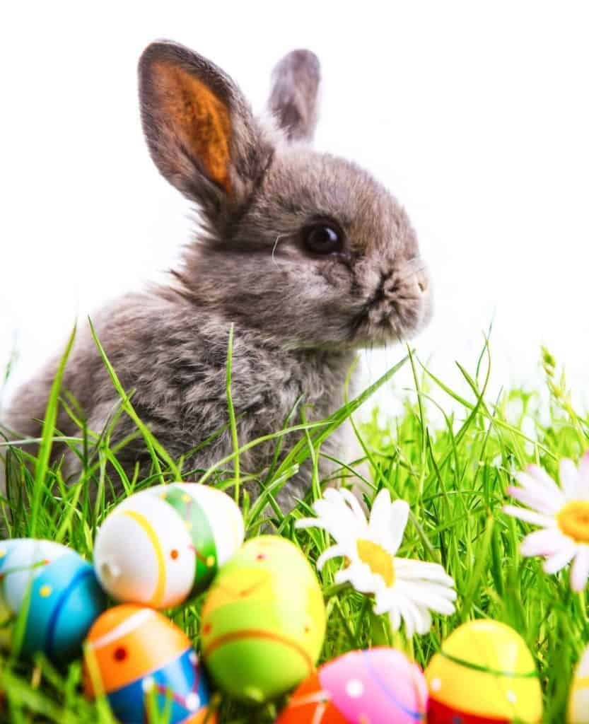 Ostern: Hasenbaby im Gras mit bunten Ostereiern.