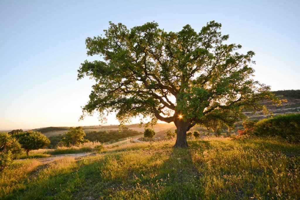 Ein großer Baum steht auf einer lichtdurchfluteten Wiese vor blauem Himmel.