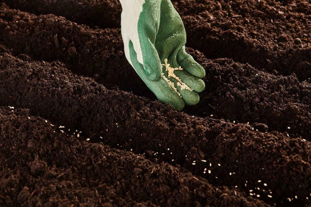 Blumenbeete: lockere schwarze Erde mit Furchen. Hier werden Blumensamen gesät