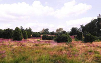 Das sind die spannenden Hot Spots der Lüneburger Heide