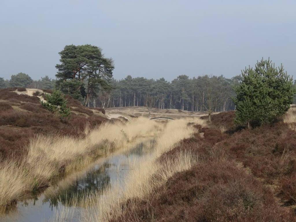 Die Lüneburger Heide: beeindruckende Landschaft mit kleinen Wäldchen und viel Heidekraut.