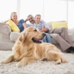 Wohnen mit Hund: Welcher Bodenbelag ist am besten geeignet?