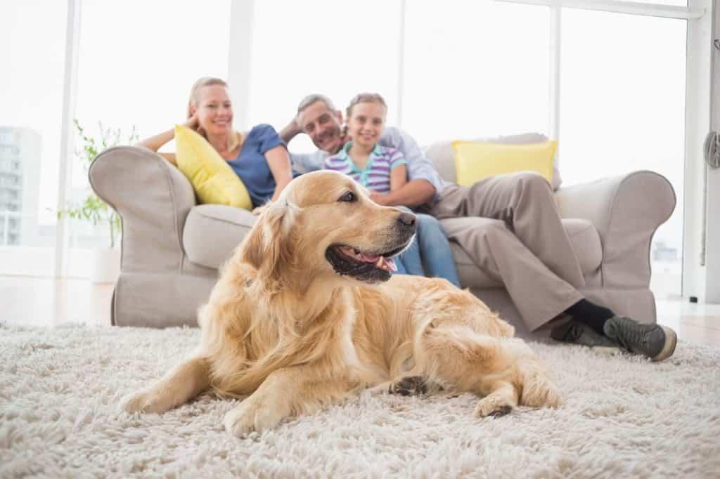Wohnen mit Hund: Golden Retriever liegt auf einem hellen Langflor-Teppich. Auf dem hellgrauen Sofa dahinter sitzen Vater, Mutter und Kind.