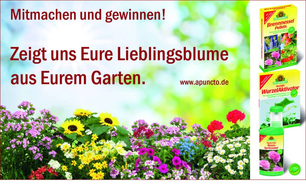 Mitmachen und gewinnen! Zeigt uns Eure Lieblingsblume aus Eurem Garten. www.apuncto.de