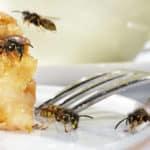 Wespen im Garten: Was tun nach einem Insektenstich?
