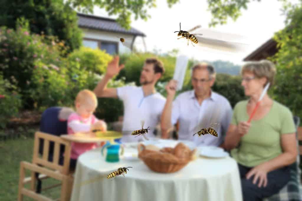 Wespenstiche lassen sich vermeiden, wenn die Tiere nicht gereizt werden