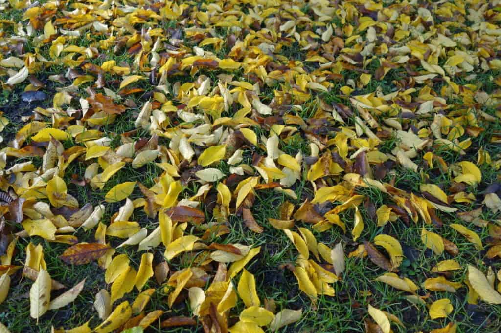Herbst: Laub liegt auf dem Rasen.