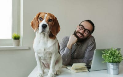 Bürohund: Ja oder nein?