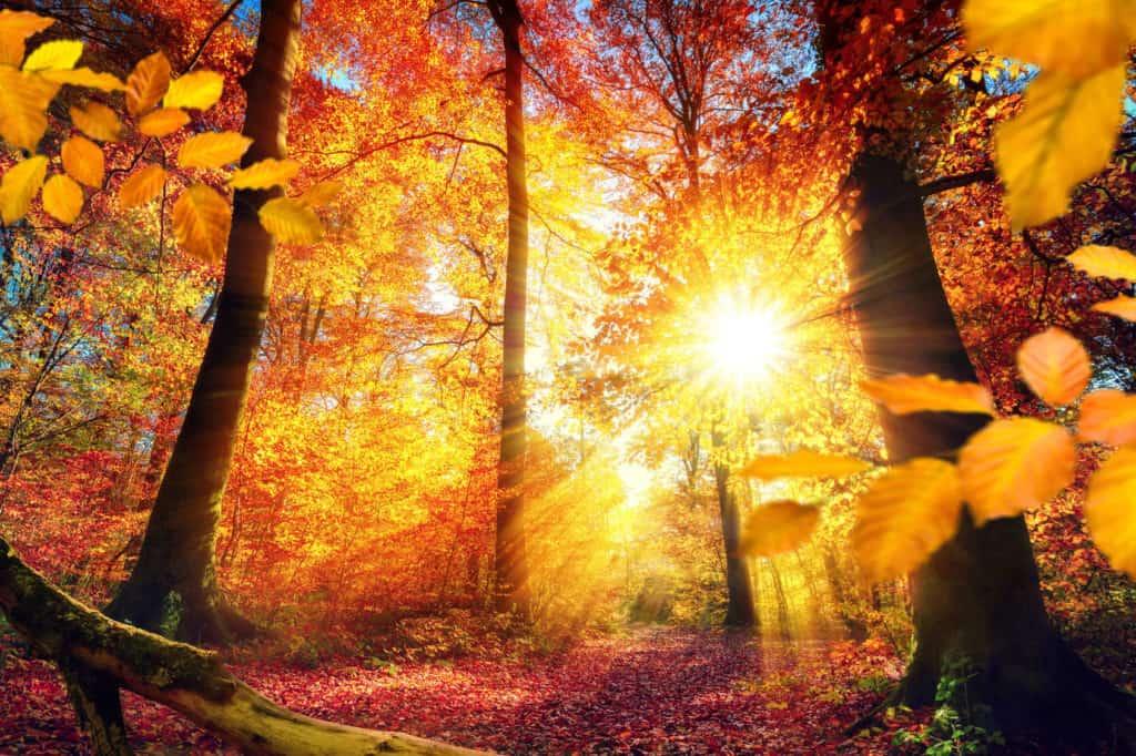 Malerischer Herbst im Wald mit viel Sonne, Laub und lebendigen Farben