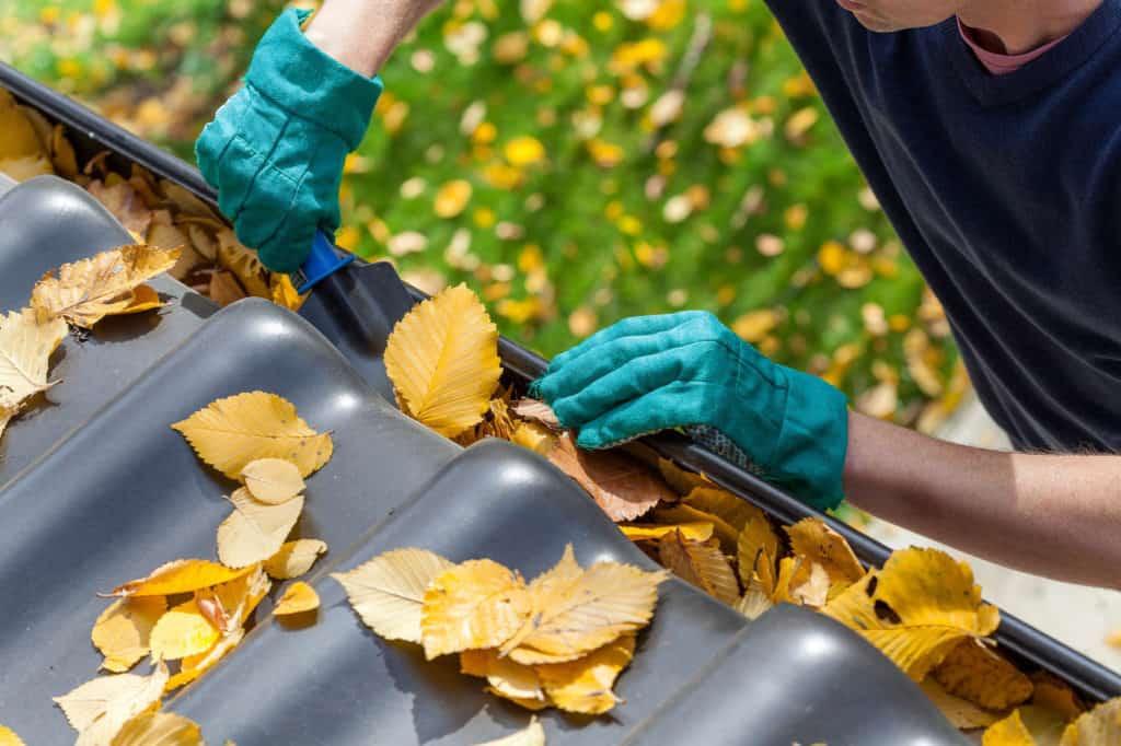 Regenrinne am Haus mit Herbstblättern.