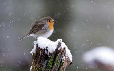 Vögel füttern in der kalten Jahreszeit – aber richtig