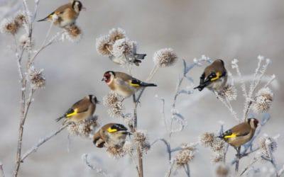 Vögel im Garten: So wird Ihr Garten vogelfreundlich