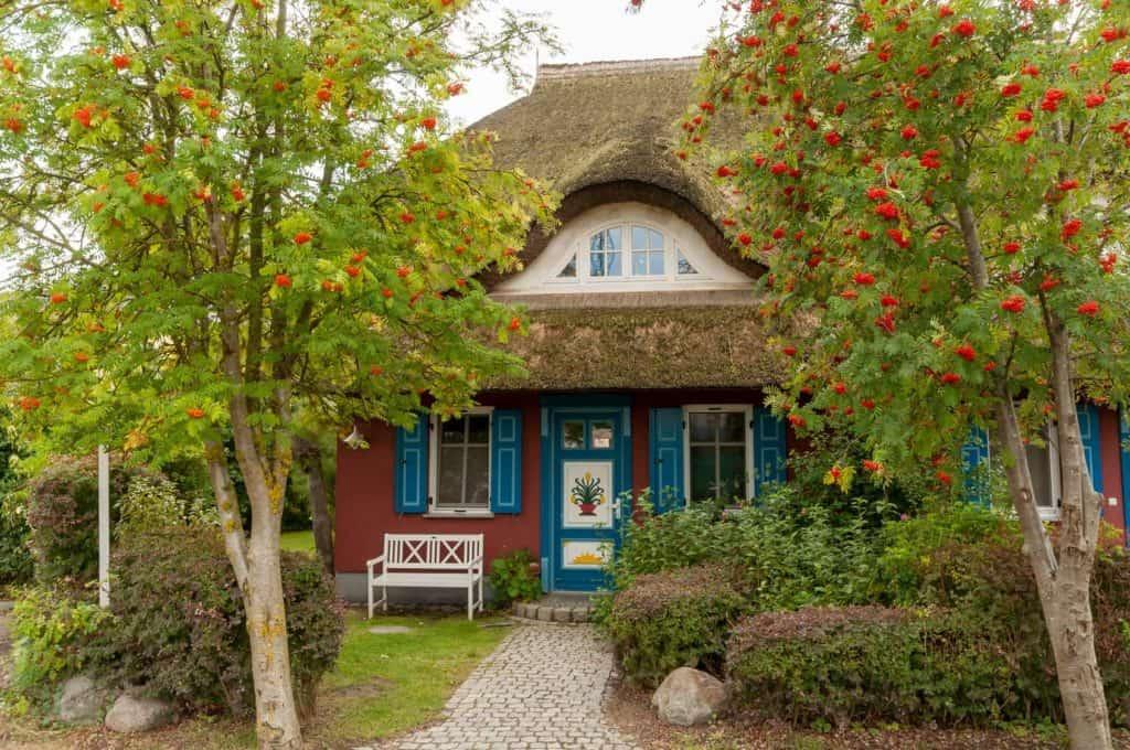 Ein Reetdachhaus mit blauen Türen und Fenstern, vor dem zwei Bäume mit roten Beeren stehen.