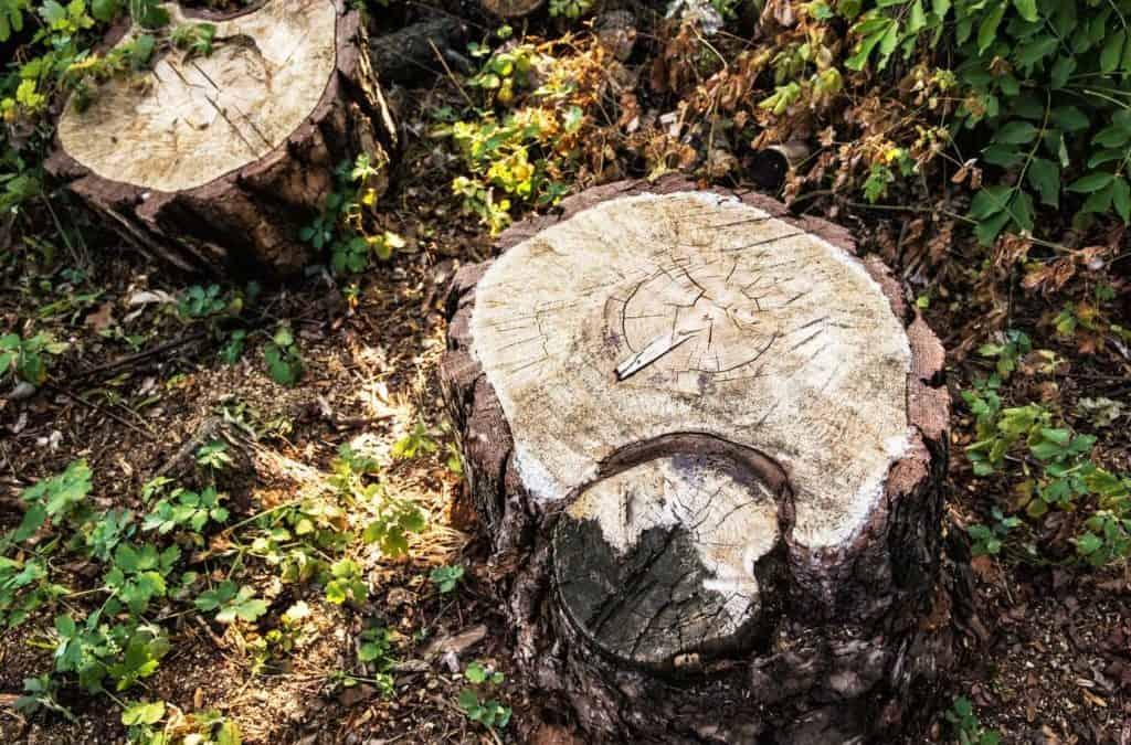 Baumstumpf entfernen: So geht's