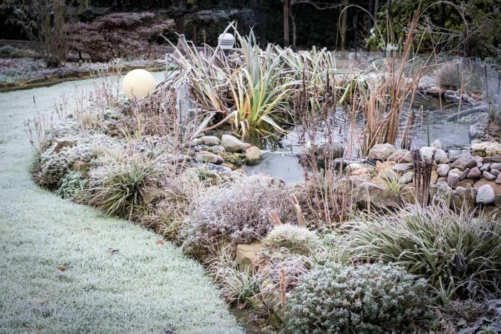 Frost im Garten mit Teich (Winterruhe im Garten)