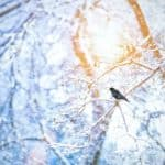 Winterruhe im Garten: Diese Basics sollten Sie wissen