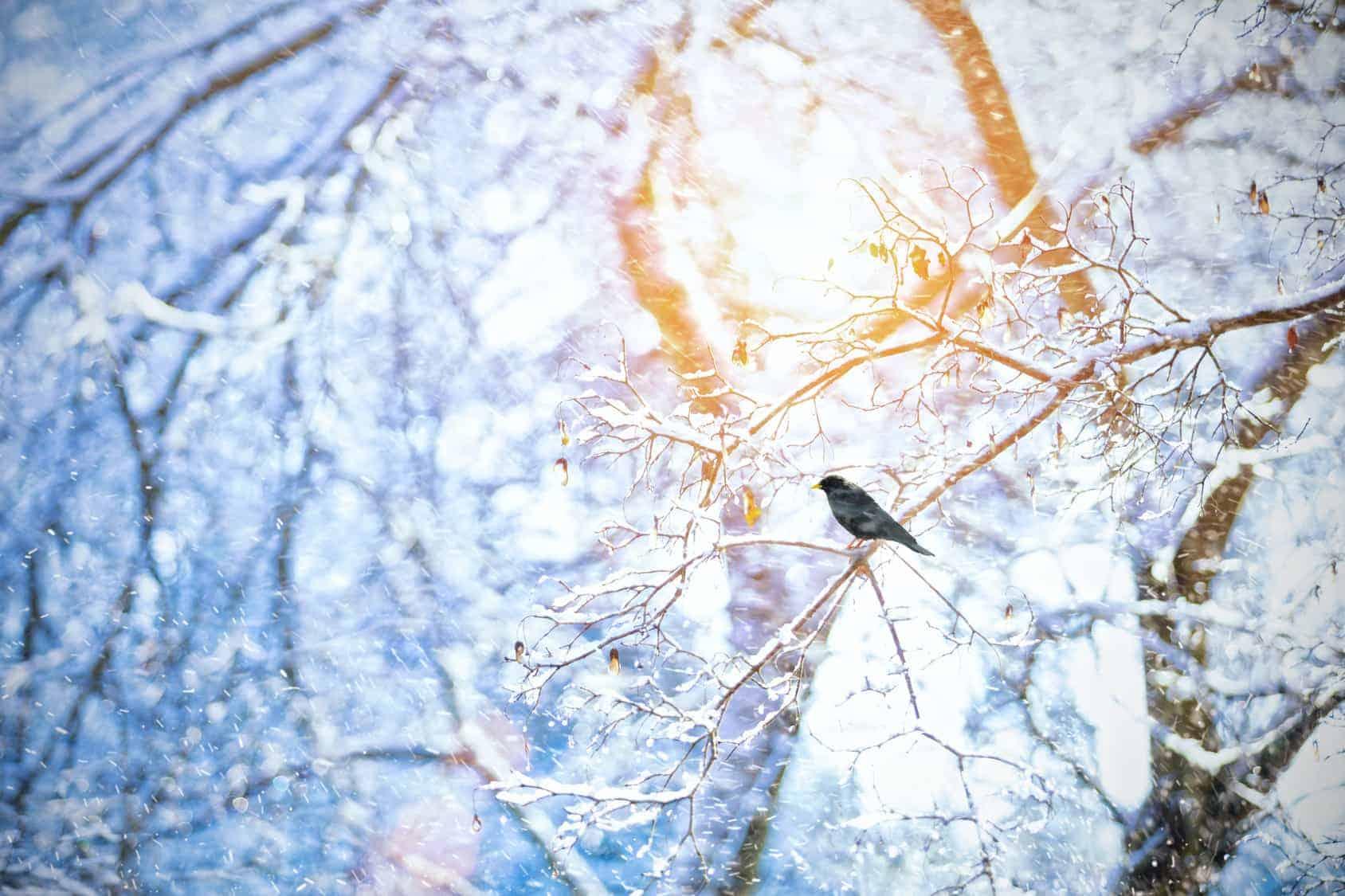 Winterruhe im Garten: gefrorene Zweige mit Vodel