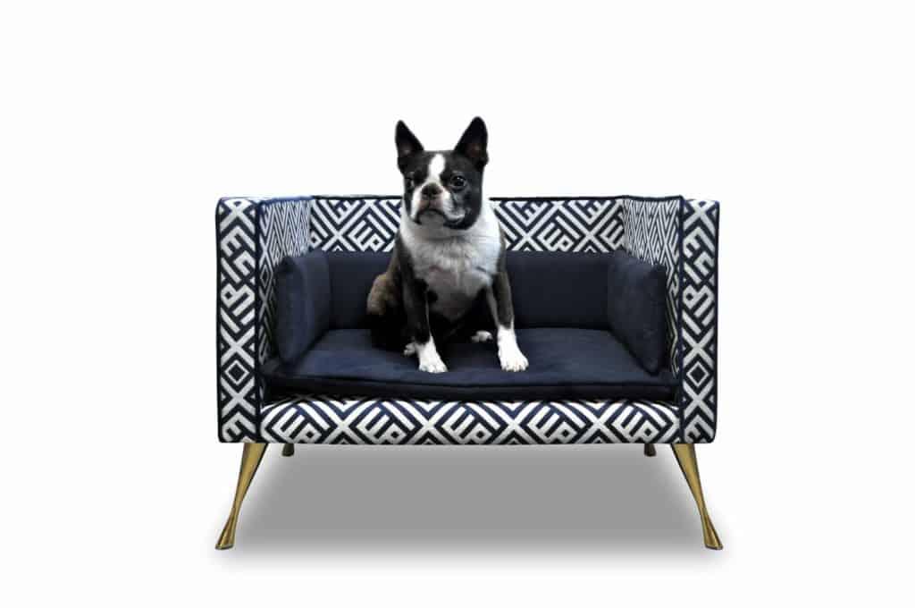 kleiner Hund auf kleinem Sofa (edle Geschenke)