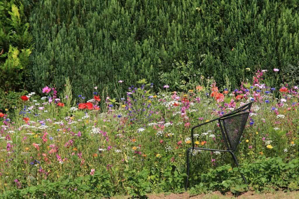 Stuhl an der Wildblumenwiese im Garten