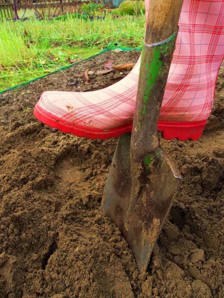 Bunter Gummistiefel mit Spaten in der Erde (Blumenwiesen im Garten.