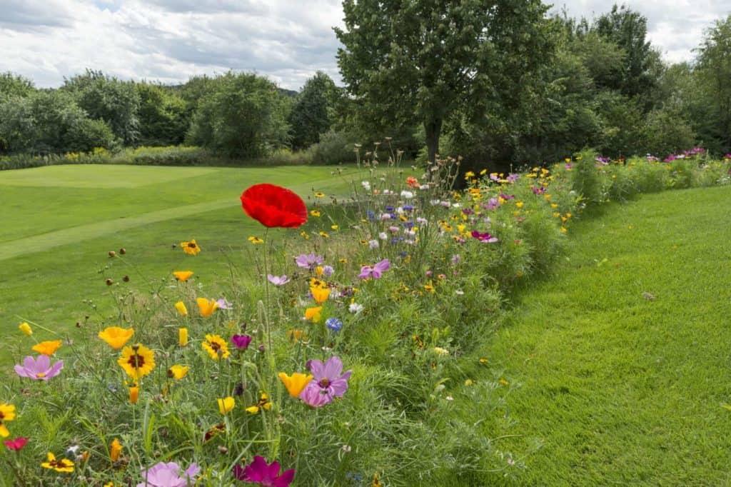 Ein Streifen Wildblumen rund um die Rasenfläche (Wildblumenwiesen im Garten)