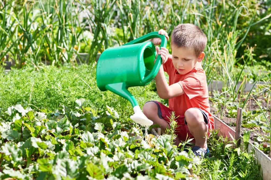 Kleiner Junge gießt die Blumen im Kinderbeet mit einer Gießkanne,