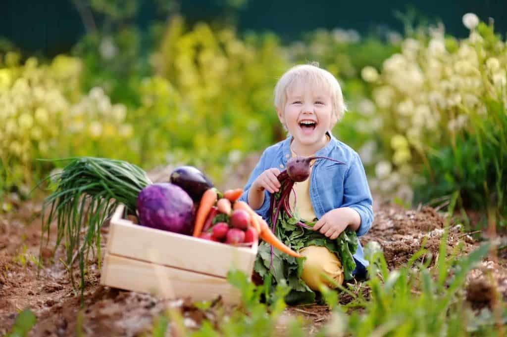 Kleiner, lachender Junge mit einer Gemüsekiste im Kinderbeet.