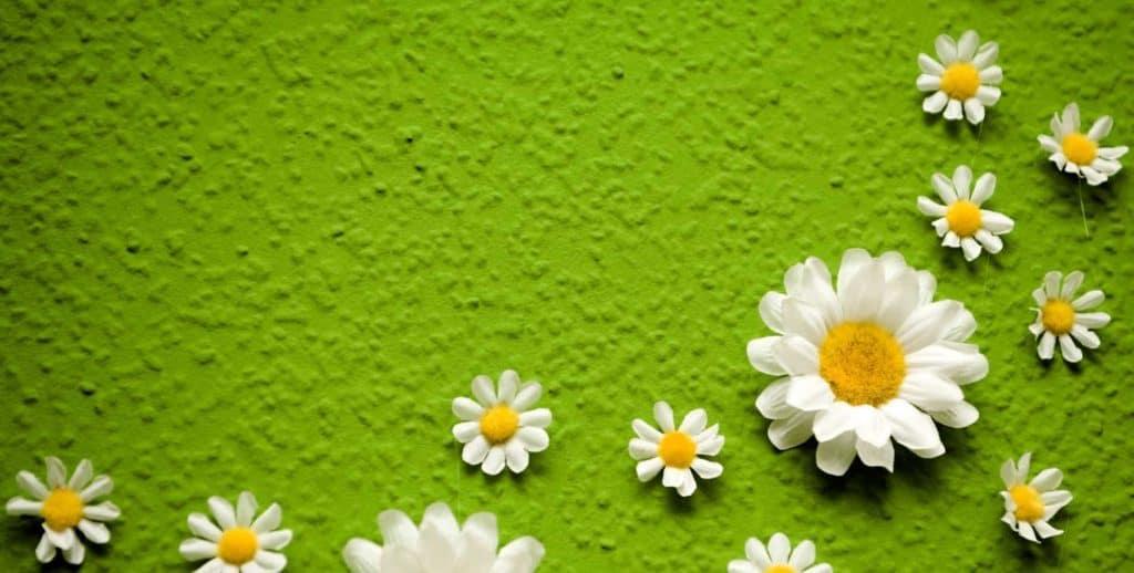Künstliche Gänseblümchen auf grüner Wand (langweilige Wände)