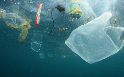 Machen Sie mit: Plastik reduzieren durch umweltschonende Alternativen