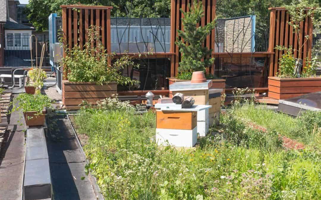 Begrüntes Flachdach: Mehr Lebensraum für Bienen und Vögel