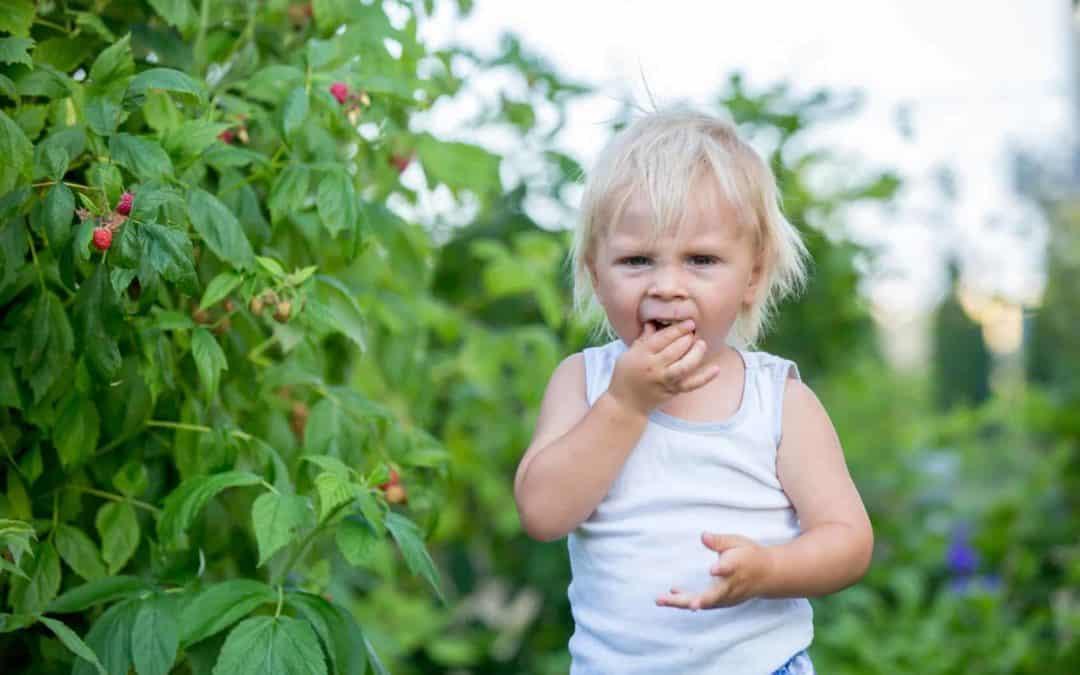 Ein kindgerechter Garten: Darauf sollten Sie achten!