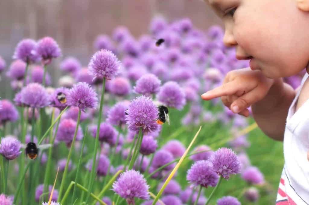Kind beobachtet eine Hummel auf einer Blume. (kindgerechter Garten)