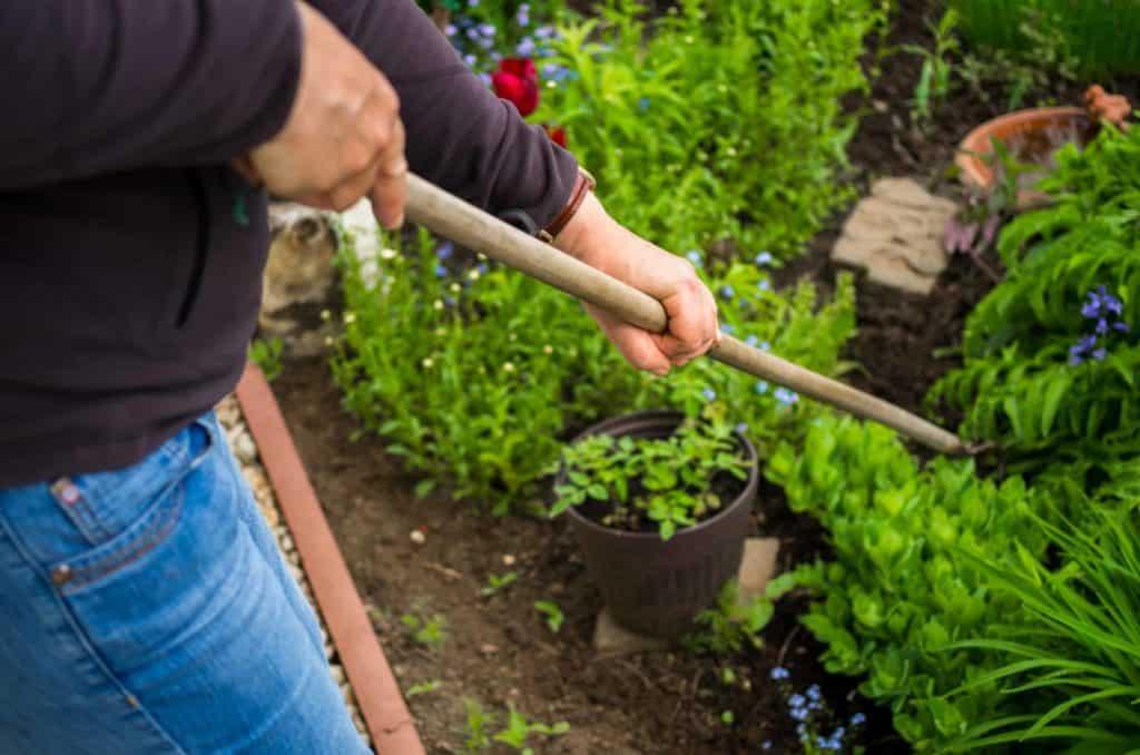 Unkrauthacke im Blumenbeet (schnelle Unkrautbekämpfung ohne Glyphosat)